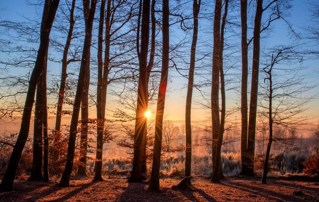 Acheter une forêt : une rentabilité à long terme